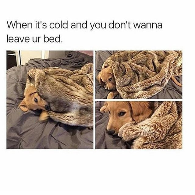 Product - When it's cold and you don't wanna leave ur bed.