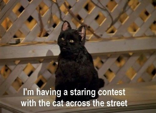 salem the cat - Cat - I'm having a staring contest with the cat across the street