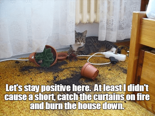 plants cat meme electricity - 9223285504