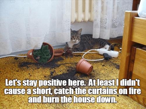 plants cat meme electricity - 9223285504