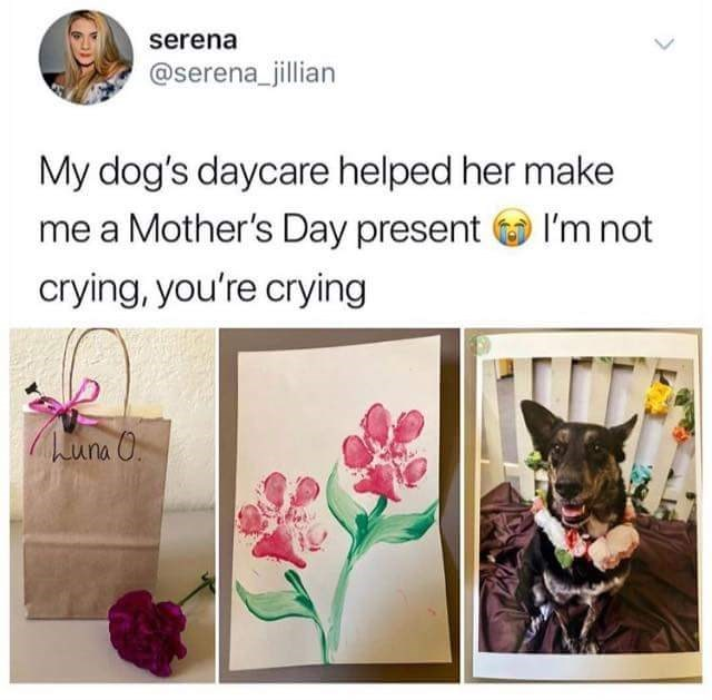 "Tweet that reads, ""My dog's daycare helped her make me a Mother's Day present. I'm not crying, you're crying"" above pics of a cute dog with a flower necklace and a Mother's Day gift"