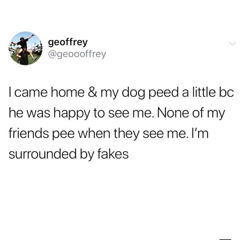 Text - geoffrey @geoooffrey I came home & my dog peed a little bc he was happy to see me. None of my friends pee when they see me. I'm surrounded by fakes