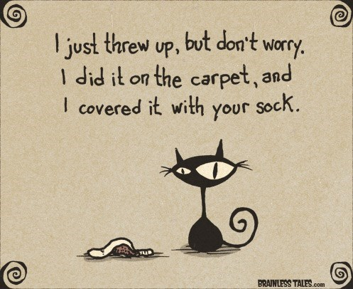 Text - ljust threw up, but don't worry. I did it on the carpet, and I covered it with your sock. BRAINLESS TALES.com