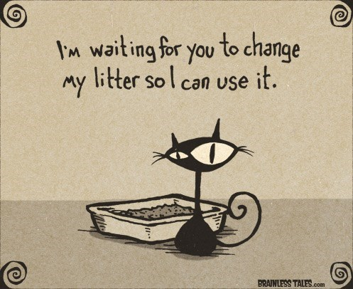 Text - m wait ing for you to change litter sol can use it. MY BRAINLESS TALES.com