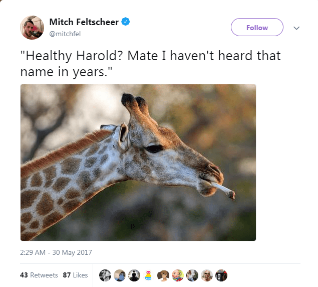 """Giraffe - Mitch Feltscheer Follow @mitchfel """"Healthy Harold? Mate I haven't heard that name in years."""" 2:29 AM -30 May 2017 43 Retweets 87 Likes"""