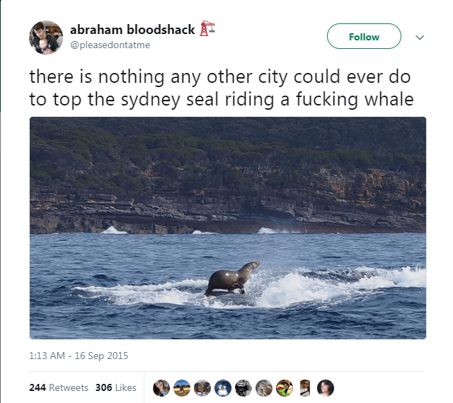 Text - abraham bloodshack A- Follow @pleasedontatme there is nothing any other city could ever do to top the sydney seal riding a fucking whale 1:13 AM - 16 Sep 2015 244 Retweets 306 Likes