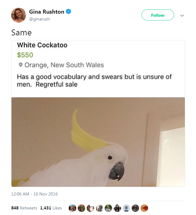 Parrot - Gina Rushton Follow @ginarush Same White Cockatoo $550 9Orange, New South Wales Has a good vocabulary and swears but is unsure of men. Regretful sale 12:06 AM - 16 Nov 2016 848 Retweets 1,431 Likes