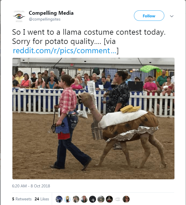 Poster - OMPELLIN Compelling Media @compellingsites Follow MEDIA So I went to a llama costume contest today. Sorry for potato quality.... [via reddit.com/r/pics/comment...] 6:20 AM 8 Oct 2018 5 Retweets 24 Likes