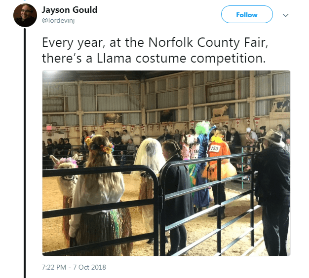 Text - Jayson Gould Follow @lordevinj Every year, at the Norfolk County Fair, there's a Llama costume competition. 153 7:22 PM 7 Oct 2018 -_