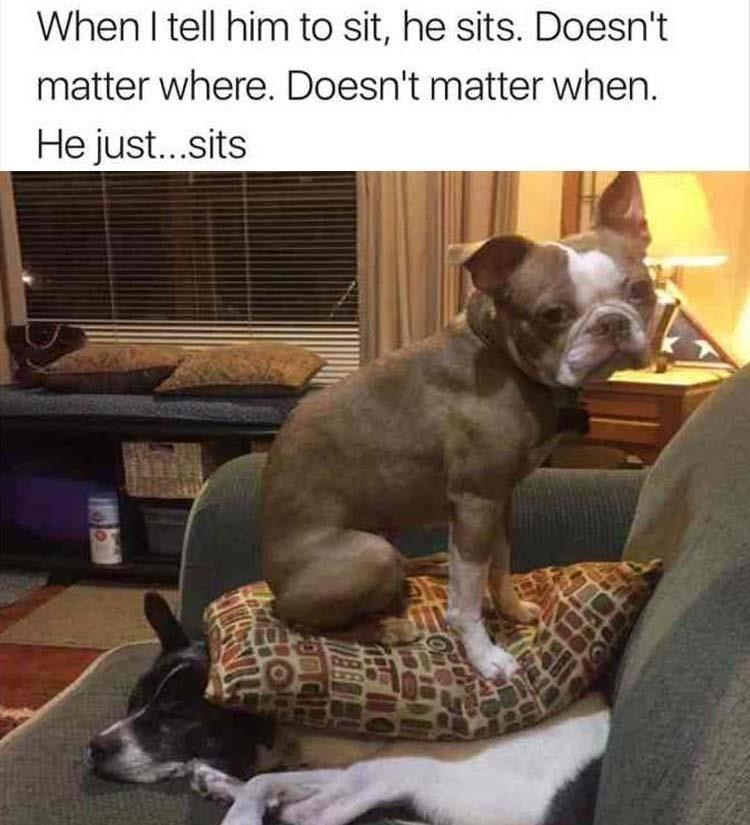 dog meme of a dog sitting on a pillow that another dog is underneath of