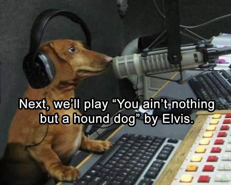dog meme of a dog that is wearing headphones at a recording studio