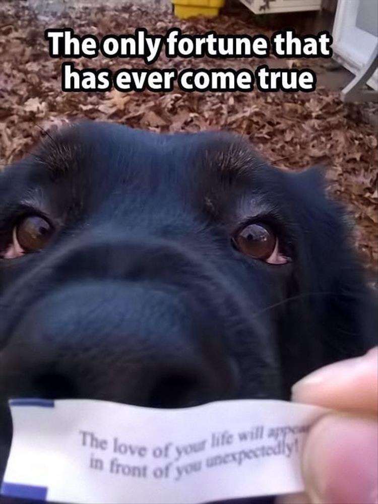 dog meme of a fortune cookie talking about love that came true in the form of their dog