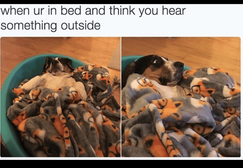 dog meme of a dog laying in a bed and sleeping but gets scared suddenly