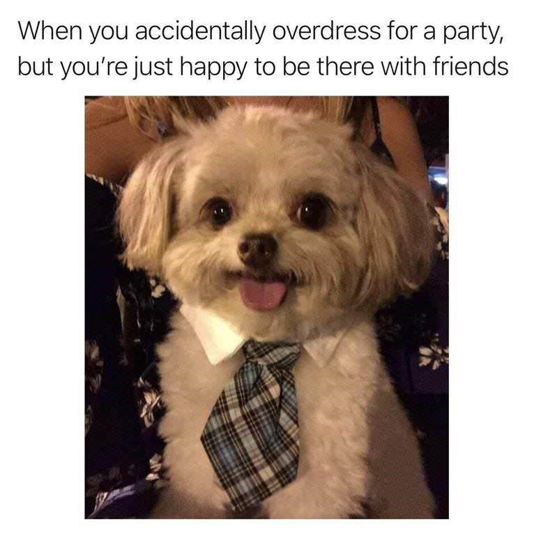 dog meme of a dog wearing a tie and is very happy
