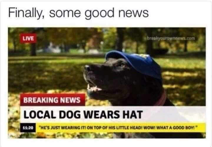 dog meme about a dog wearing a hat and it made the news