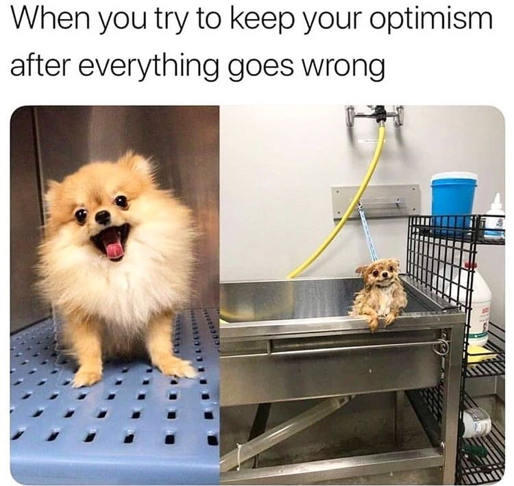 dog meme of a Pomeranian before and after a bath