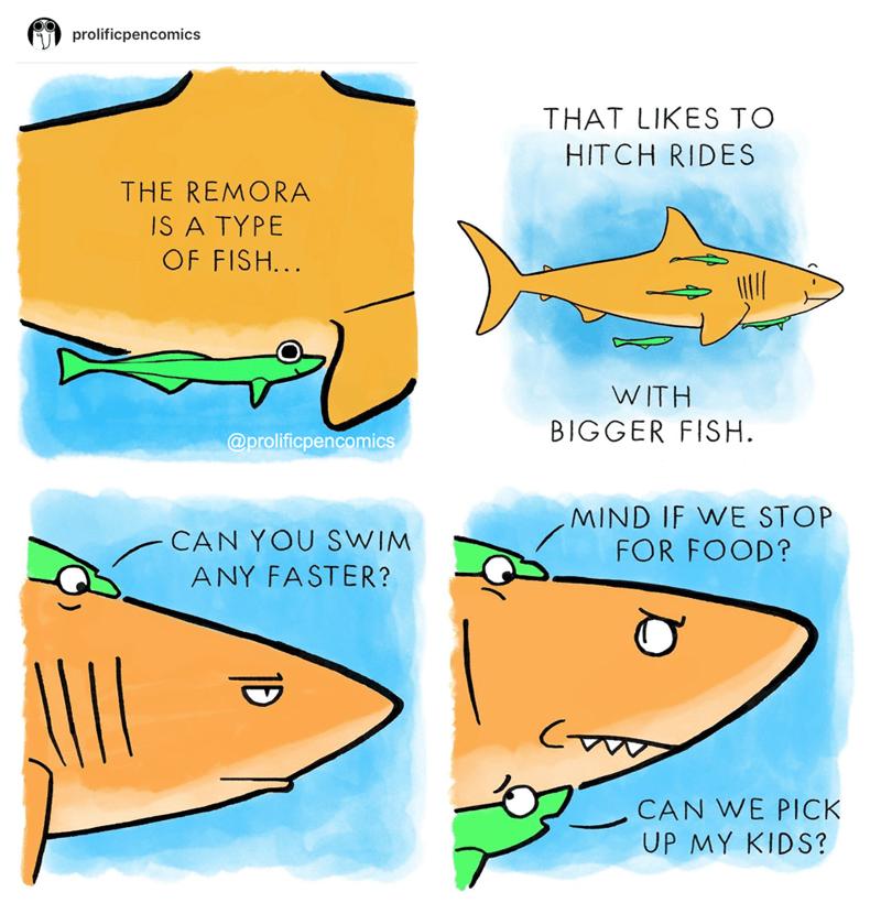 remora comics under the sea taxi prolificpencomics funny - 9223915264