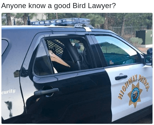 Bird in the back of a police car with caption asking for Bird Lawyer, a reference to Charlie Kelly from IASIP