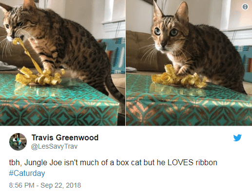 Cat - Travis Greenwood @LesSavyTrav tbh, Jungle Joe isn't much of a box cat but he LOVES ribbon #Caturday 8:56 PM - Sep 22, 2018