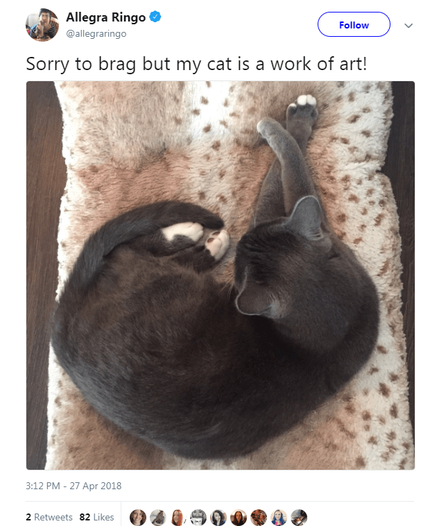 Hair - Allegra Ringo Follow @allegraringo Sorry to brag but my cat is a work of art! 3:12 PM 27 Apr 2018 2 Retweets 82 Likes