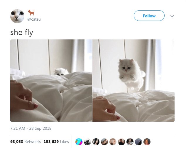 Product - Follow @catsu she fly 7:21 AM - 28 Sep 2018 63,050 Retweets 153,629 Likes