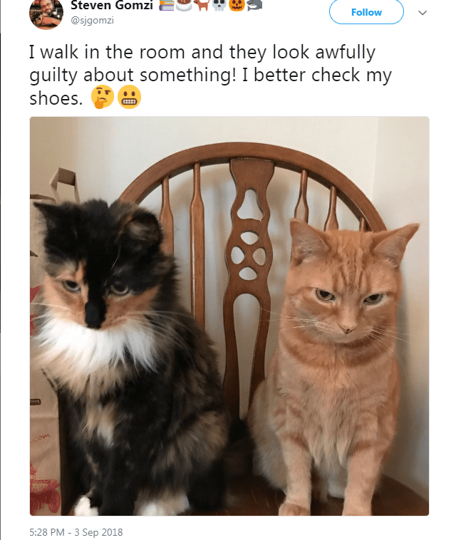 Cat - Steven Gomzi Follow @sigomzi I walk in the room and they look awfully guilty about something! I better check my shoes Com 5:28 PM -3 Sep 2018