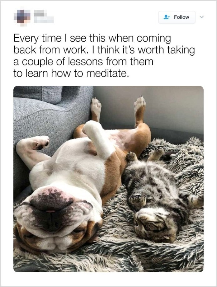Canidae - Follow Every time I see this when coming back from work. I think it's worth taking a couple of lessons from them to learn how to meditate.