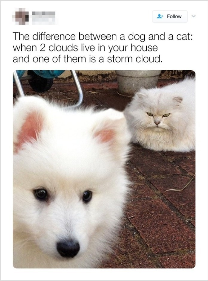 Mammal - Follow The difference between a dog and a cat: when 2 clouds live in your house and one of them is a storm cloud. kakemnakan