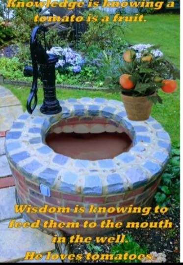weird meme - Water feature - tornato isa fruit. Wisdom-is knowing to lecd themto the mouth in the we Heloves tomatoes?