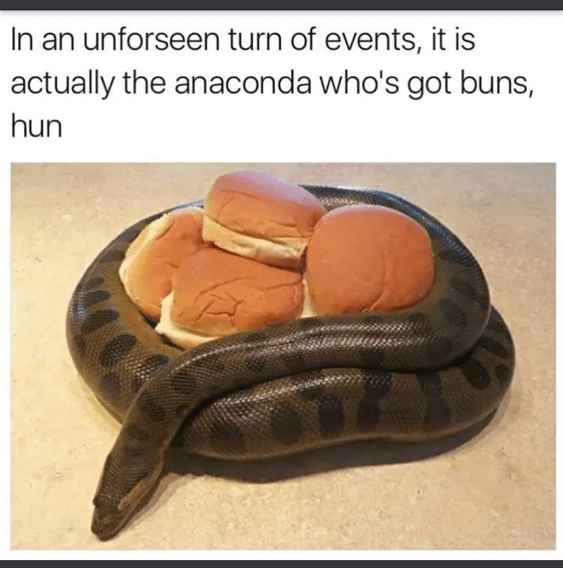 "Caption that reads, ""In an unforeseen turn of events, it is actually the anaconda who's got buns, hun"" above a pic of a snake protecting a bunch of hamburger buns"