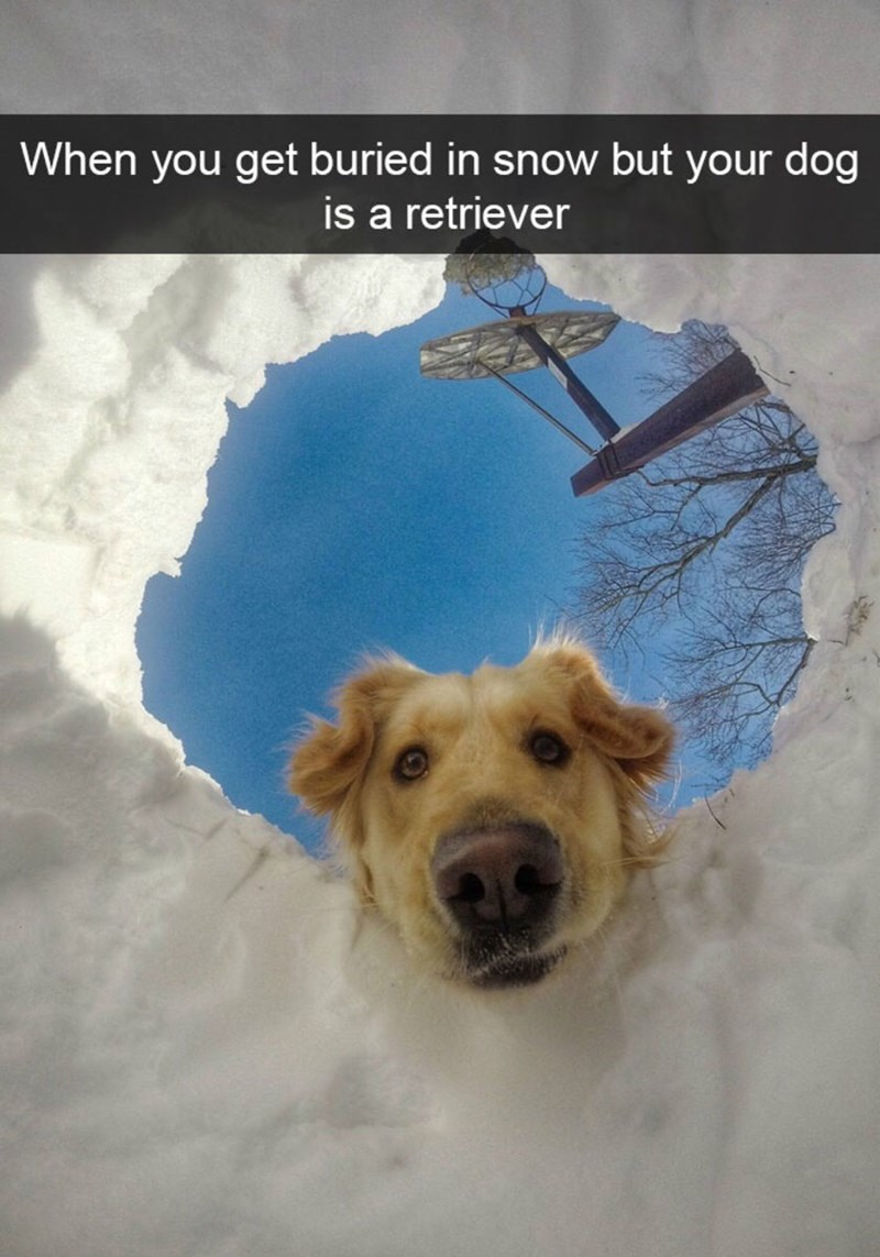 """Pic of a golden retriever looking down into a hole dug in the snow with Snapchat text overlay that reads, """"When you get buried in snow but your dog is a retriever"""""""