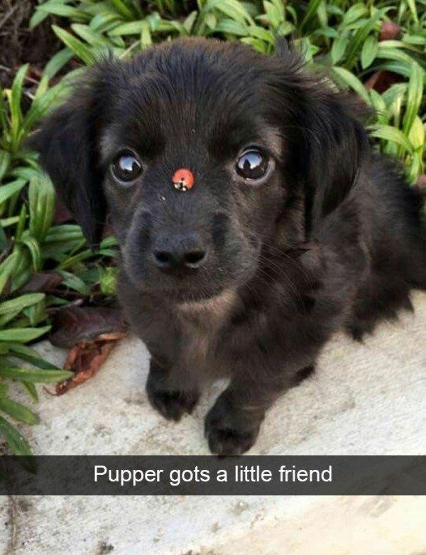 Pic of a puppy that has a ladybug on his nose