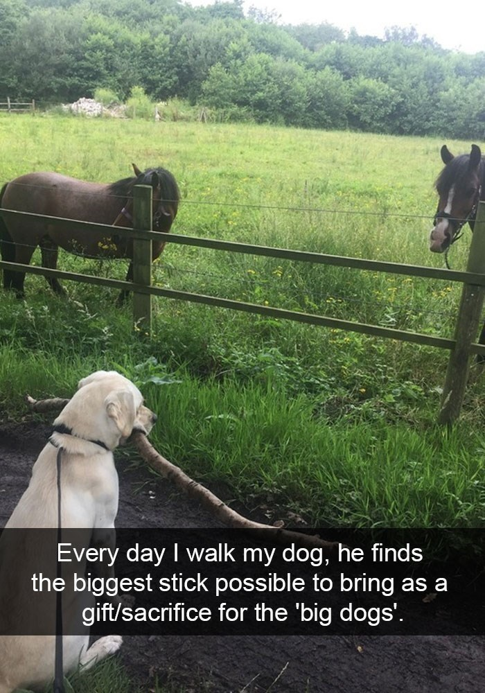 dog pic holding a large stick in front of horses