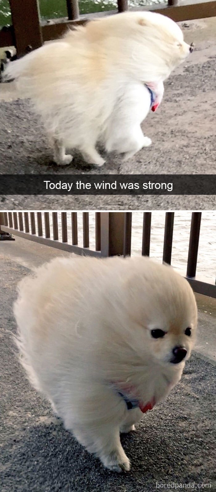 dog pic getting it's fur blown by the wind