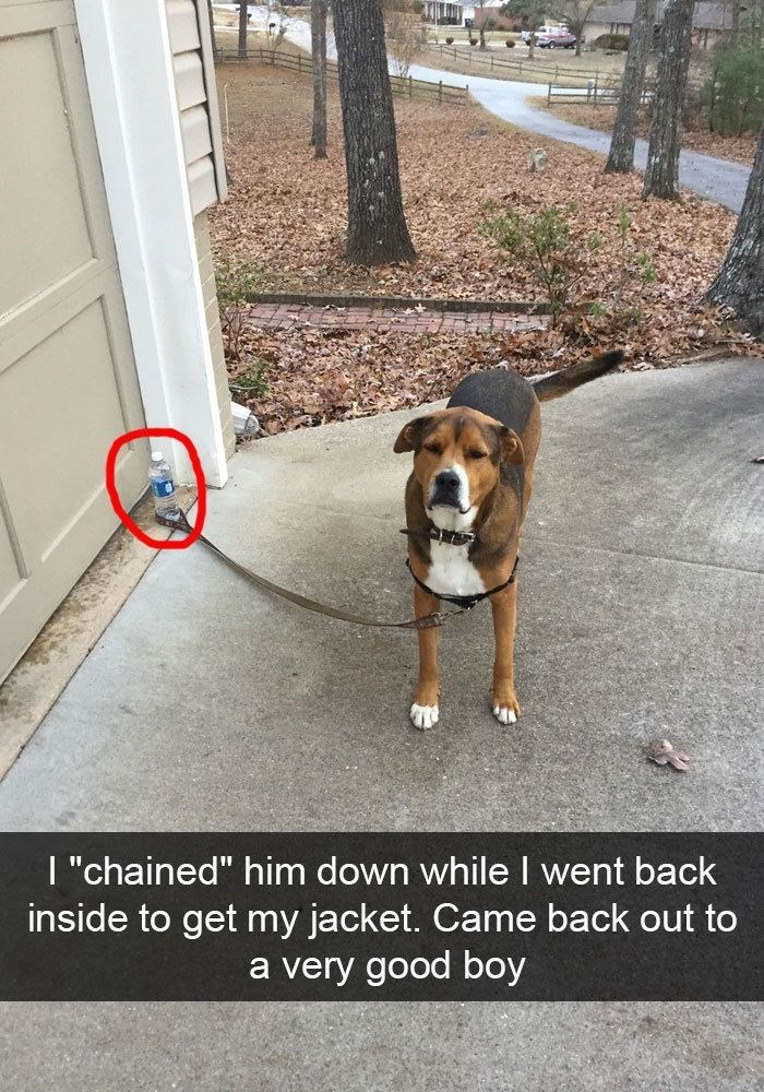 dog pic behaving himself even though its a fake chain