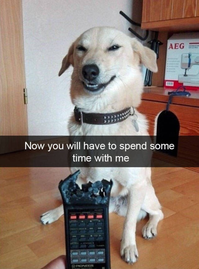"Pic of a a dog looking smug with a chewed up a tv remote and the Snapchat text overlay that reads, ""Now you will have to spend some time with me"""