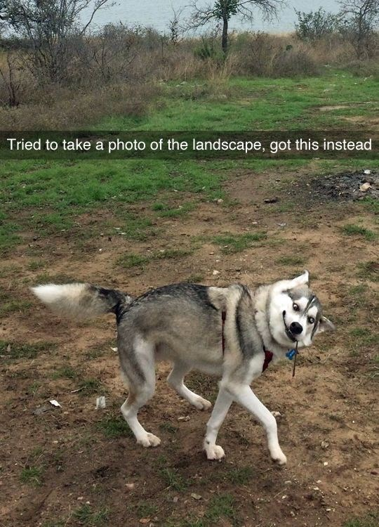pic of dog with a confused facial expression