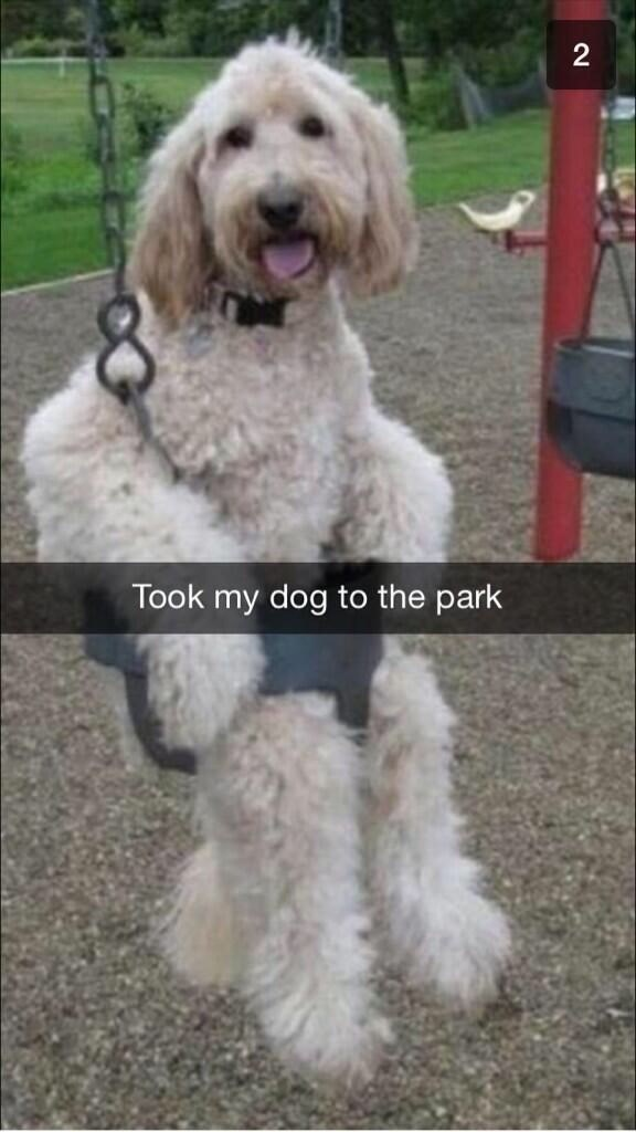 pic of a dog at a playground sitting in the swing set