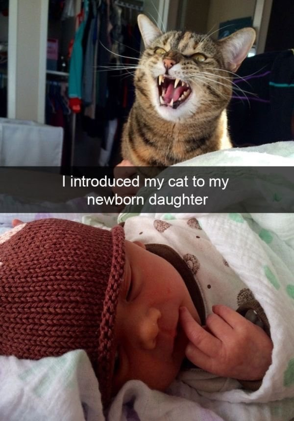 pic of a cat making a snarling face when looking at a newborn baby