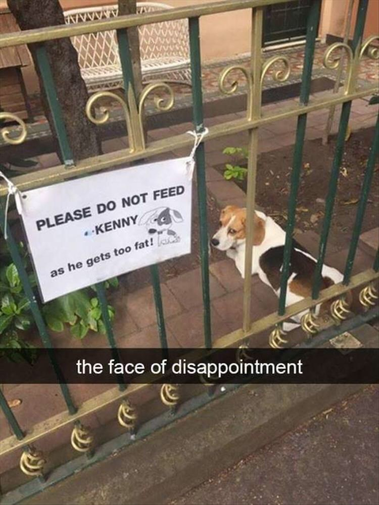 pic of a dog outside his home that has a sign not to feed him because he gets too fat