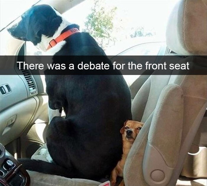 pic of a dog sitting in the front seat of a car