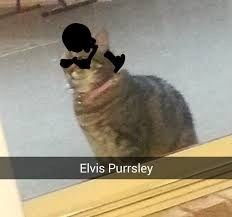 cat pic wearing glasses and hair that looks like Elvis Presley