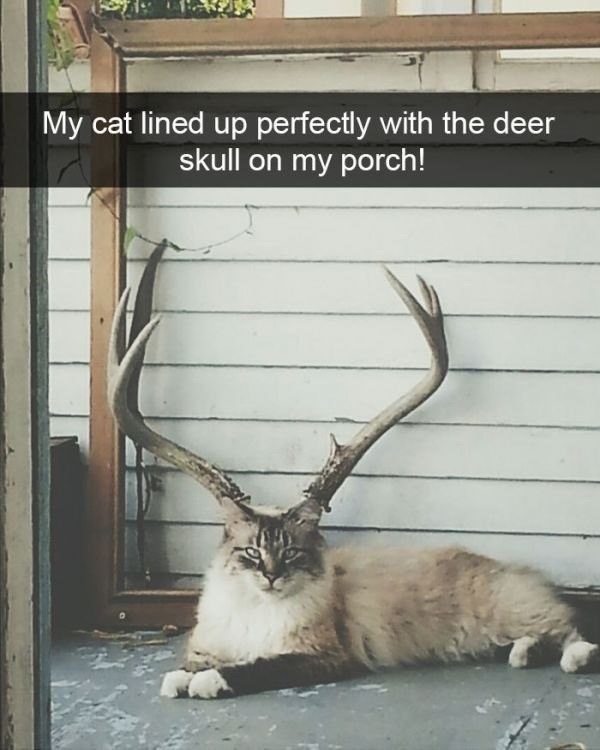 pic of a cat sitting under deer horns