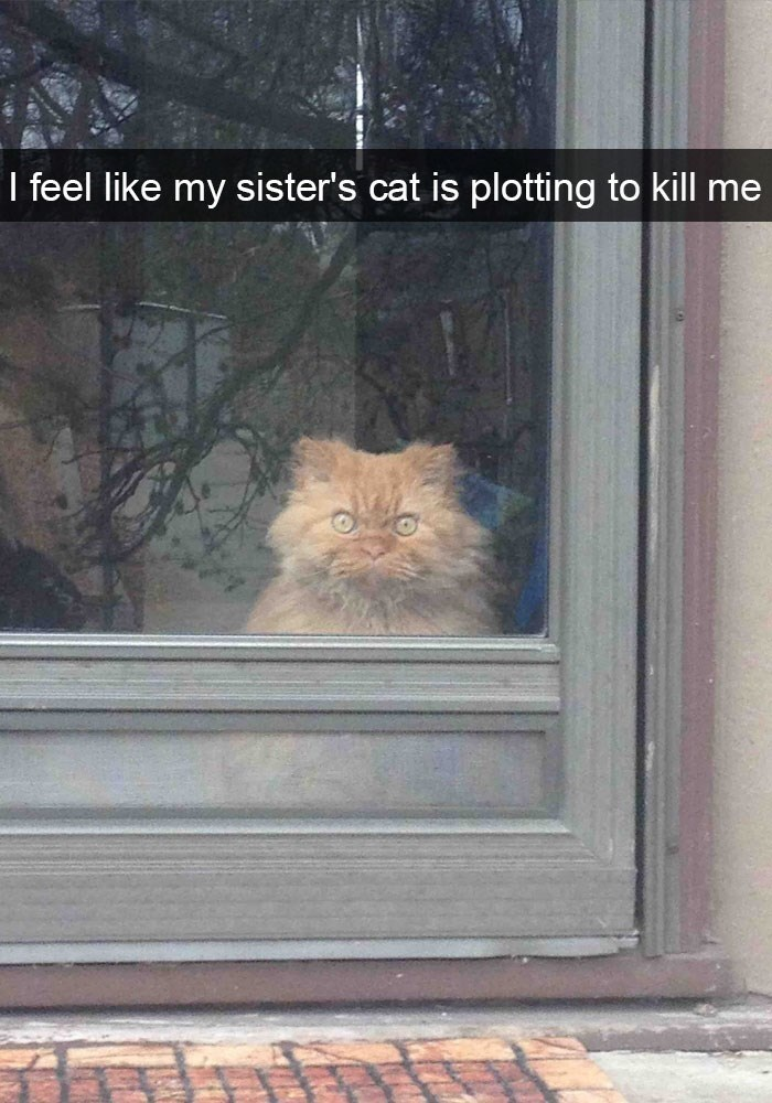 pic of a cat looking out a window with a very menacing expression