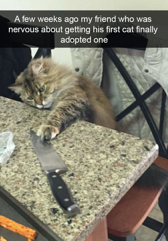 pic of a cat touching a large kitchen knife