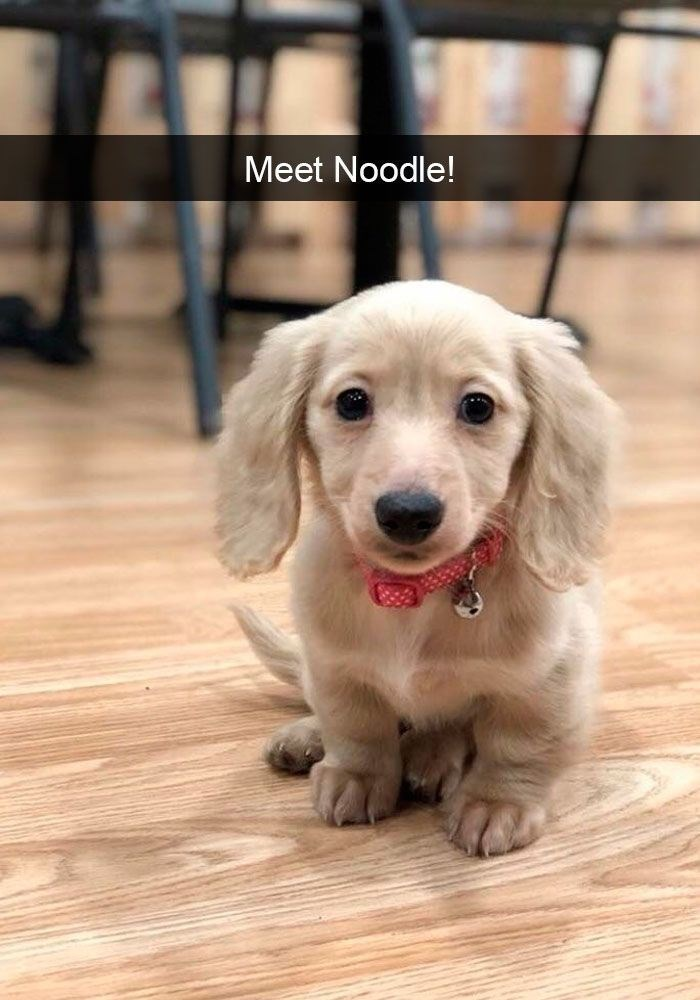 dog pic of a puppy named noodle