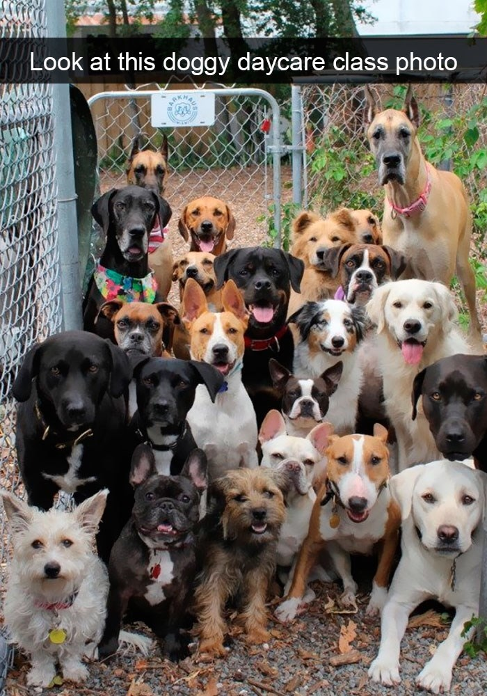 pic of a doggy daycare class photo