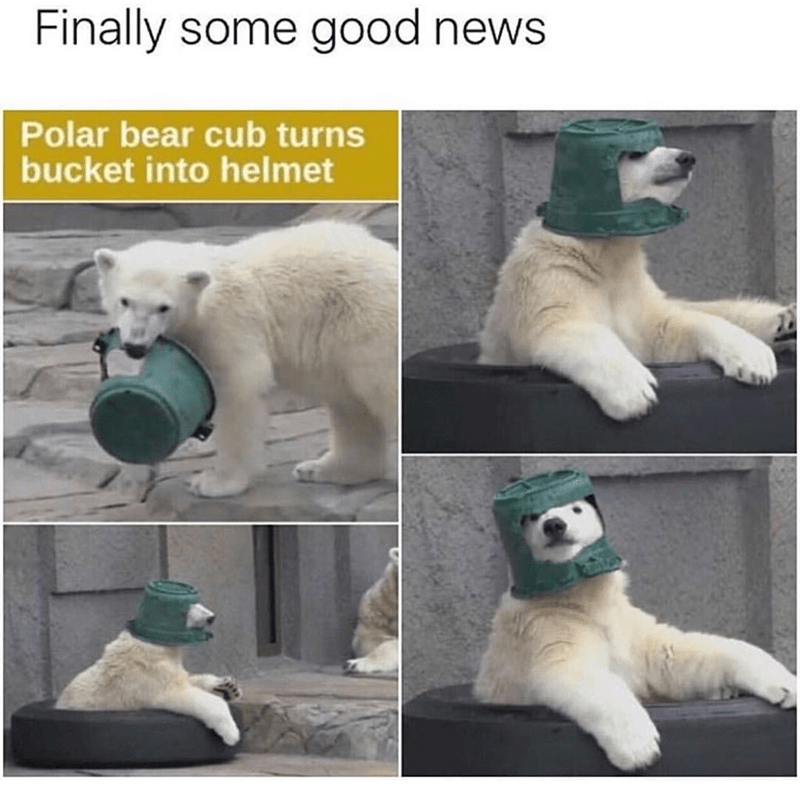 "Caption that reads, ""Finally some good news,"" above some pics of a polar bear that turned a bucket into a helmet"