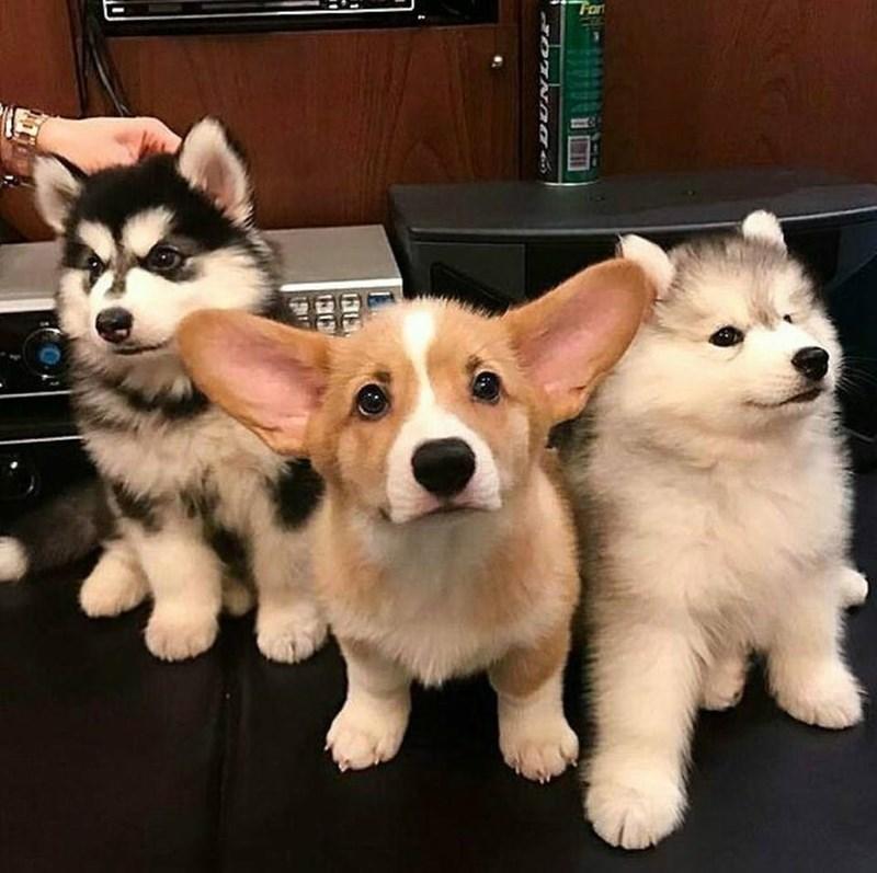 dogs puppies cute good boy boy band - 9224350464
