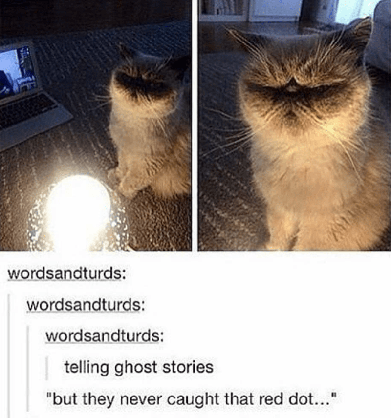 caturday meme about cats telling scary stories about red dots